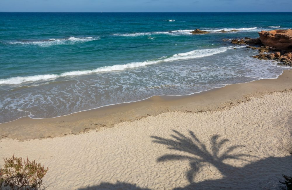 The beach and shadow of palm tree in Pilar de la Horadada.